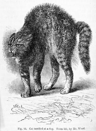 'Cat terrified at a dog', 1872.