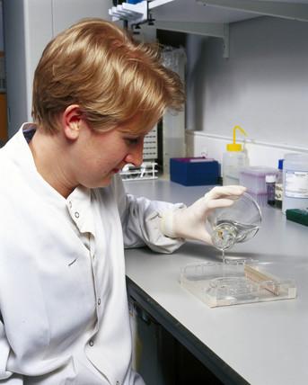 Scientist loading agarose gel to separate DNA fragments.