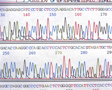 A sequencing chromatograph showing a DNA sequence.
