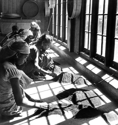 Women examining sifted tea at a tea factory