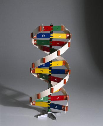 DNA molecular model kit, USA, 1986.