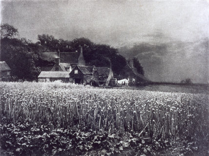 'The Onion Field', 1890.
