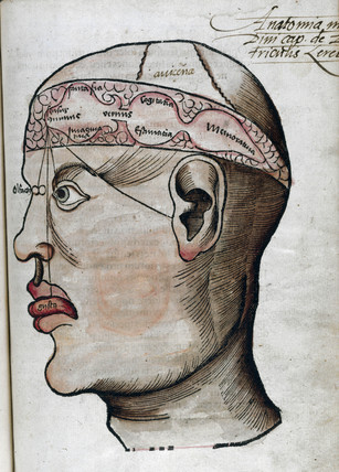 'The anatomy of the brain', 1535.