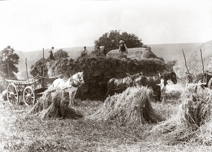 Bringing in the harvest, late 19th century.
