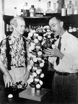 Pauling and Corey with their alpha helix model, c 1950s.