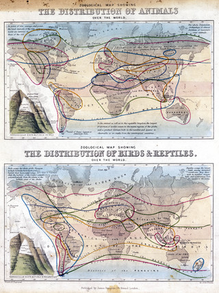 Zoological Maps Of The World C 1850 Memoryprints Com High