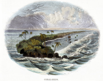 'Coral-Reefs', 1849.
