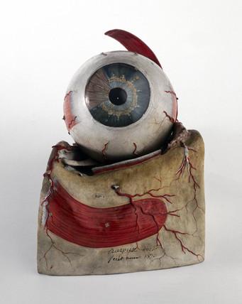 Model of human eye, French, c 1870.