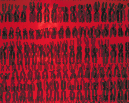Repeated pattern of the 23 pairs of human chromosomes.