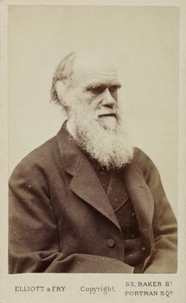 Charles Darwin, English naturalist, c 1870s.