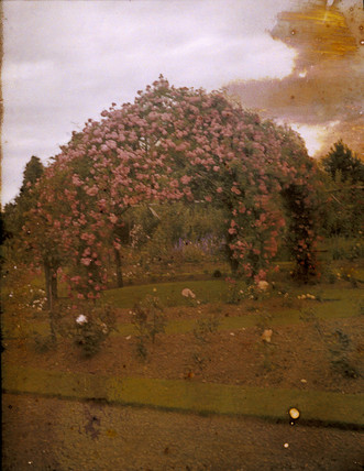Autochrome of a garden full of flowers, c 1908.