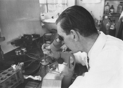 Scientist conducting IVF research, Jesop Hospital, Sheffield, 1970.