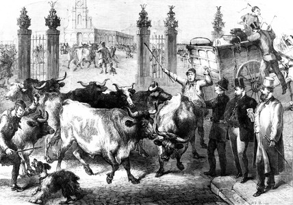 Inspecting foreign cattle, Metropolitan Market, King's Cros, London, 1865