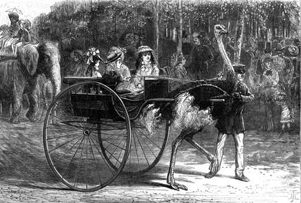Ostrich cart , 1875.