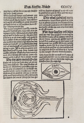 The structure of the eye, 1512.