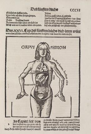 Human anatomy, 1512.