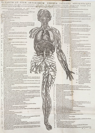 The circulation of the human body, 1543.