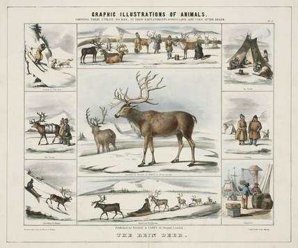 'The Rein Deer', c 1845.