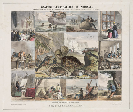 'Crustacea & Reptiles', c 1845.