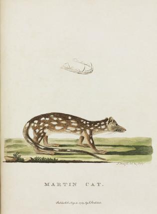 'Martin Cat', Australia, c 1788.