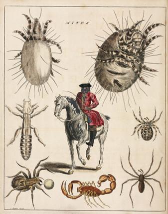 'Mites', 1736.