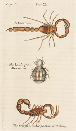 Scorpions and louse, 1736.