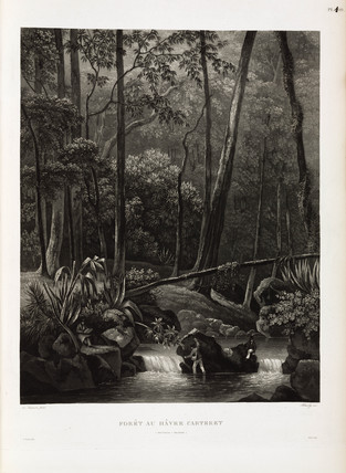 Rainforest at Carteret Haven, New Ireland, 1826-1829.