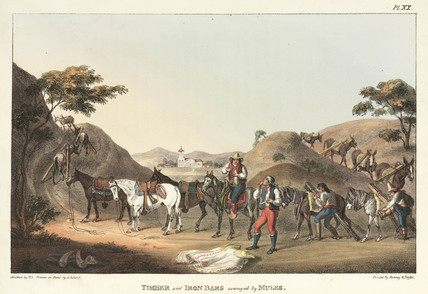 'Timber and Iron Bars conveyed by Mules', Chile, 1820-1821.