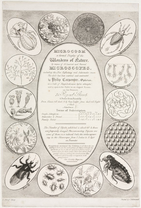 'Microcosm: A Grand Display of the Wonders of Nature', c 1827.