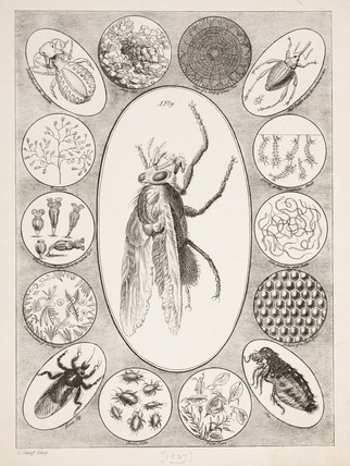 Microscopic objects, 1827.