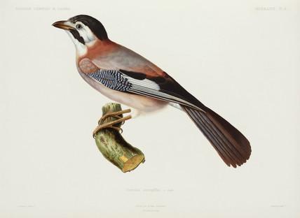 Jay, Algeria, 1840-1842.