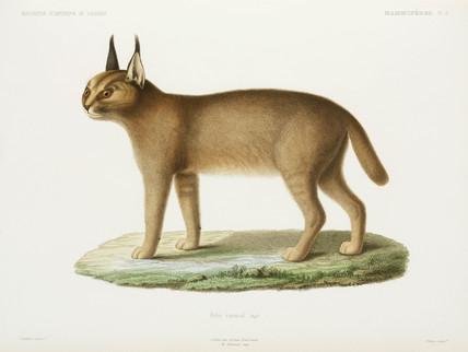 Caracal, Algeria, 1840-1842.