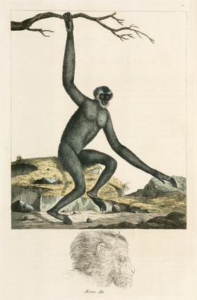 Gibbon, 1776.