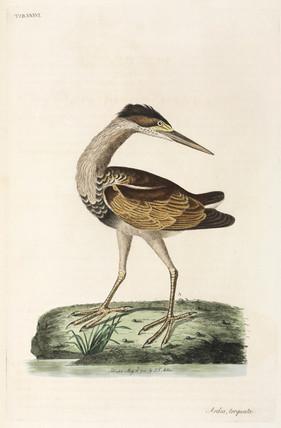 Heron, 1782.