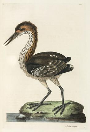 Heron, 1776.
