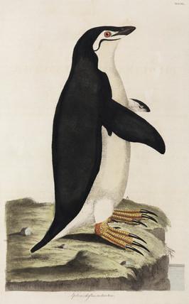 Penguin, 1776.