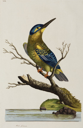 Kingfisher, 1776.