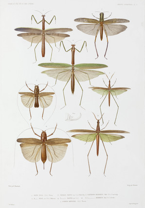 Types of insect, Australia and Indonesia, 1837-1840.