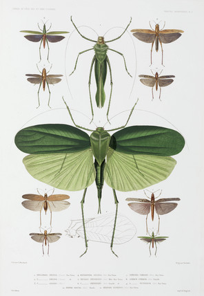 Types of insect, Tenerife and Indonesia, 1837-1840.