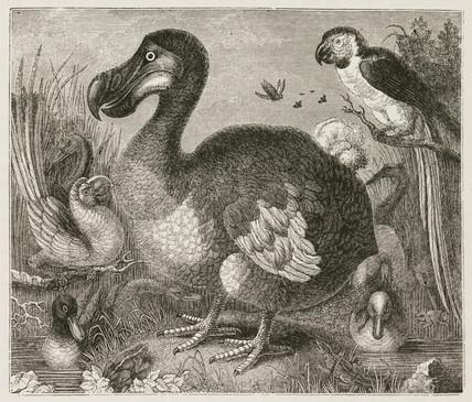 The Dodo, 1848.