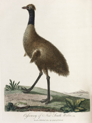 'Cassowary of New South Wales', 1789.