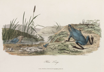 'Blue Frogs', 1789.
