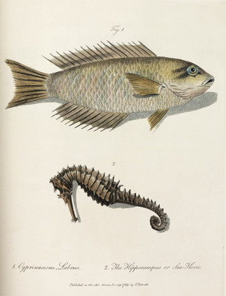 Fish and seahorse, 1789.