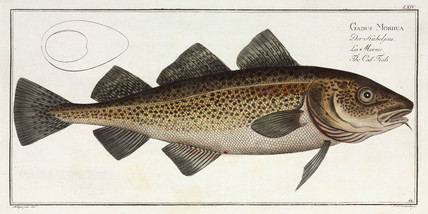 'The Cod Fish', 1785-1788.