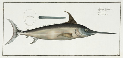 'The Sword-Fish', 1785-1788.