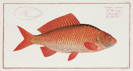 'The Gold-Fish', 1785-1788.