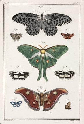 Butterflies, 1775-1781.