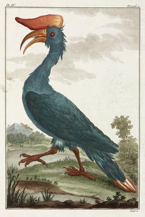 Hornbill, East Indies, 1775-1781.