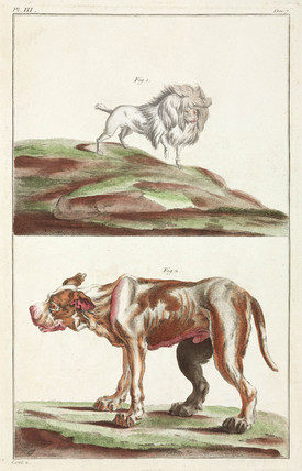 Dogs, 1775-1781.
