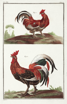 Cockerels, 1775-1781.